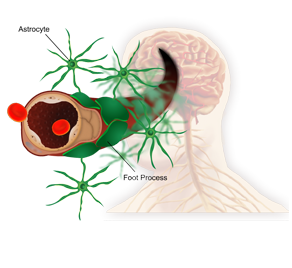 Keeping medical staff up to date on disease training is crucial for life science organizations. This module explores the blood-brain barrier and how it contributes to the progression of MS.