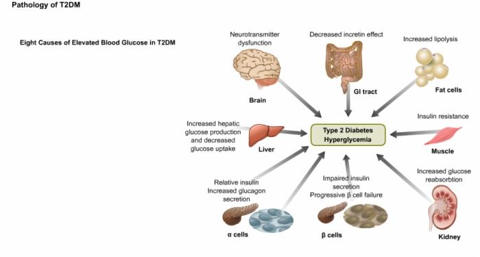 2. Pathophysiologie - MGDA Coaching