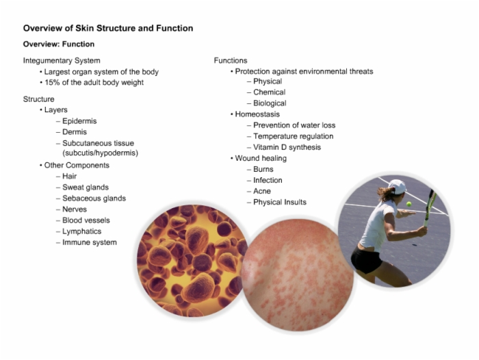 Dermatologyanatomyandphysiologyoftheskin