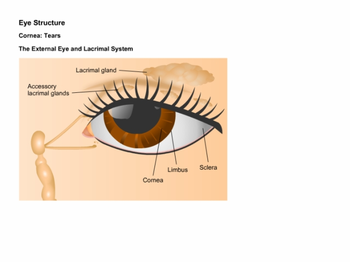Ophthalmologyanatomyandphysiologyofvision