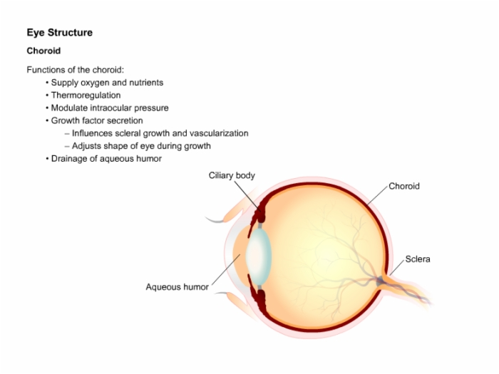 Ophthalmology_Anatomy_and_Physiology_of_Vision