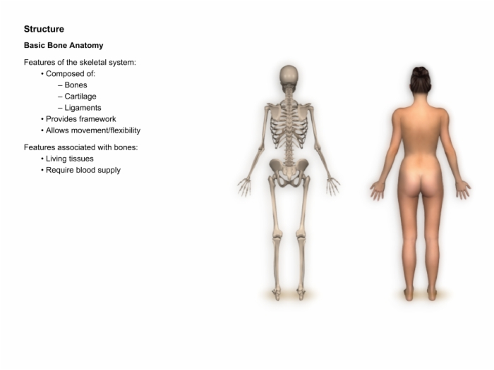 Osteoporosisbonebiologyandanatomy