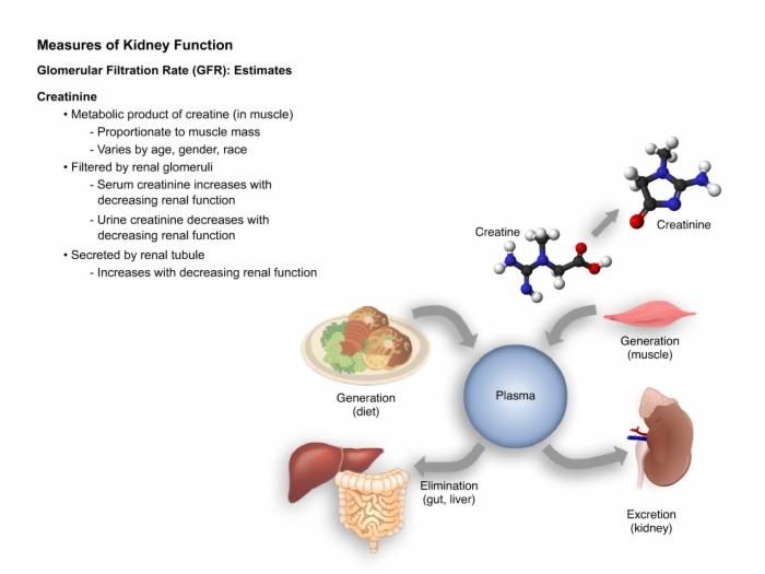 Nephrology_Kidney_Function