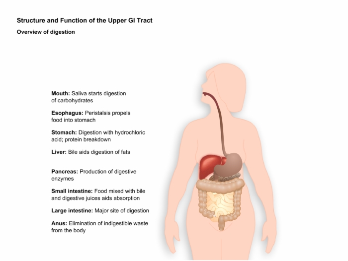 Oncology_Gastric_Cancer