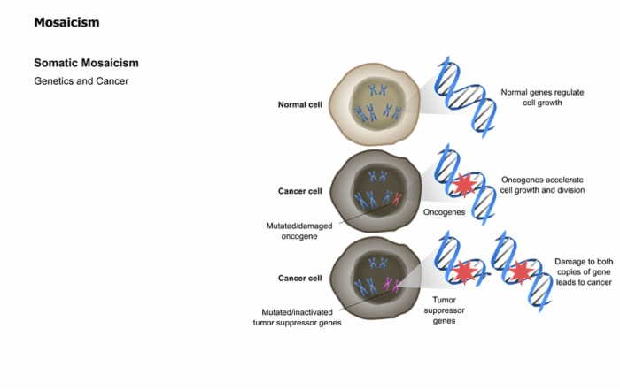 mendelian and non mendelian genetics pdf